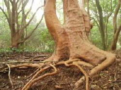 何だか外国からやってきた木みたい